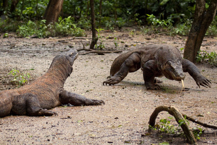 komodo adventures tours 3D/2N