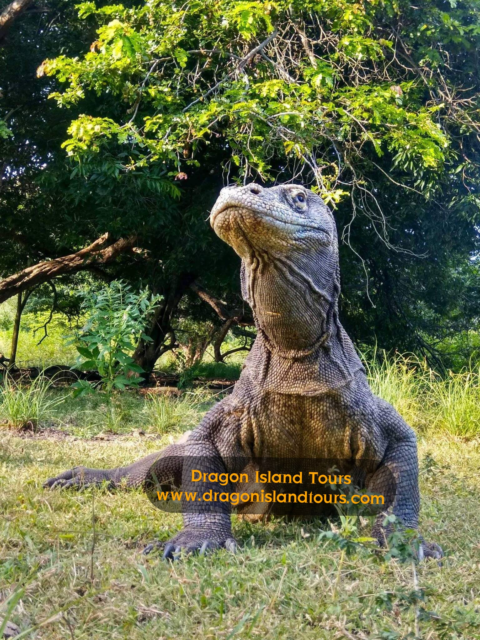 Komodo Dragon Rinca  Tours 2D/1N
